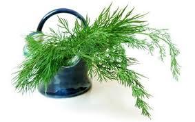 укропный чай для похудения