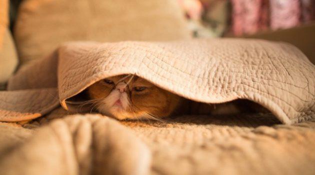одеяло купить магазин